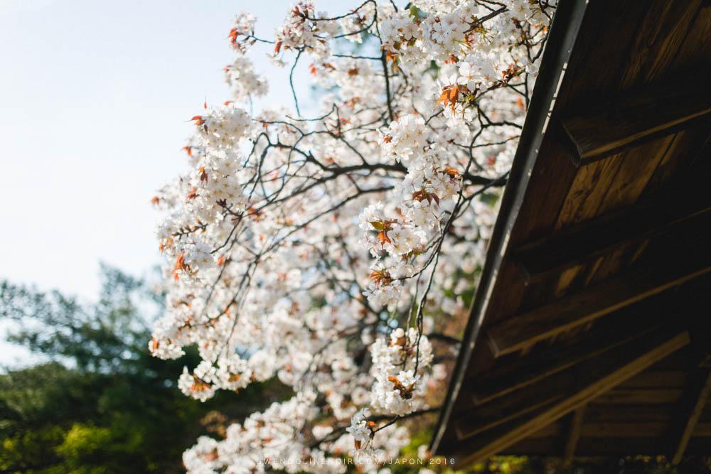 Photographe japon gwendoline noir Lyon France japan-16